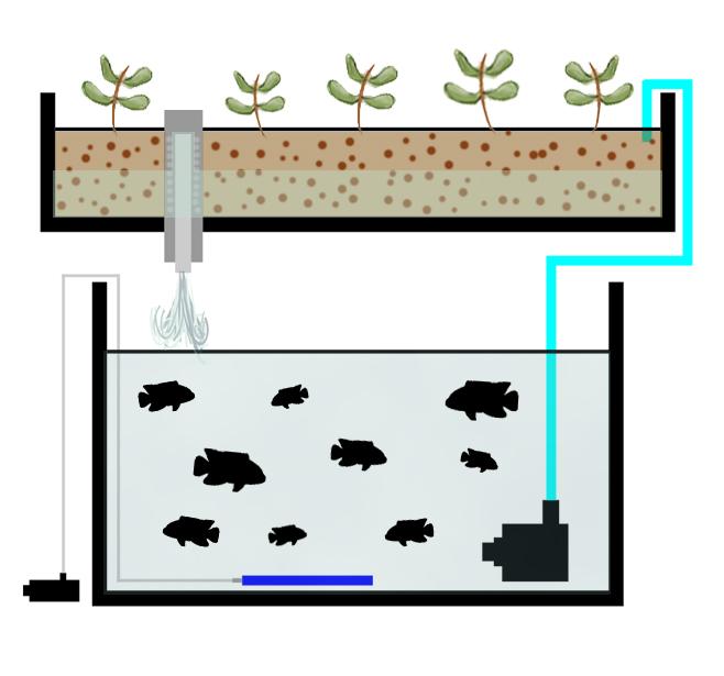 aquaponics build the best aquaponics garden possible from novice to expert aquaponics hydroponics homesteading organic gardening self sufficiency