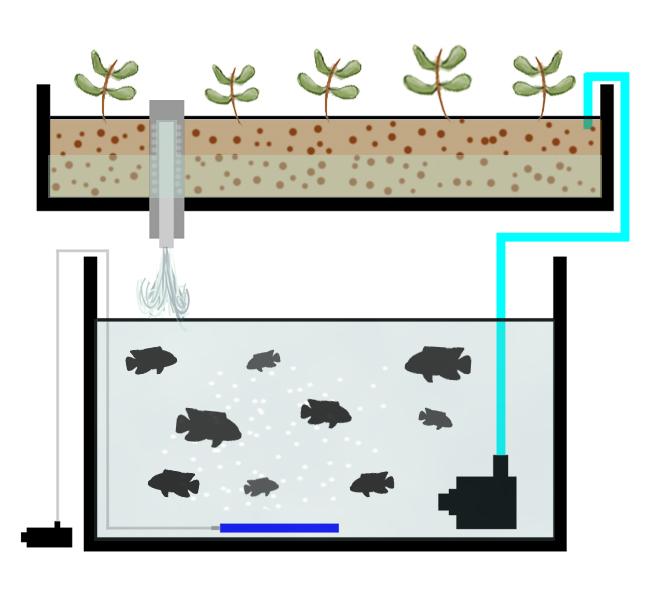 Hydroponic Flood Table Aquaponics - Hydroponics World