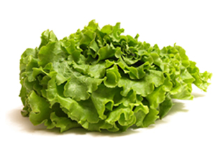 lettuce-head