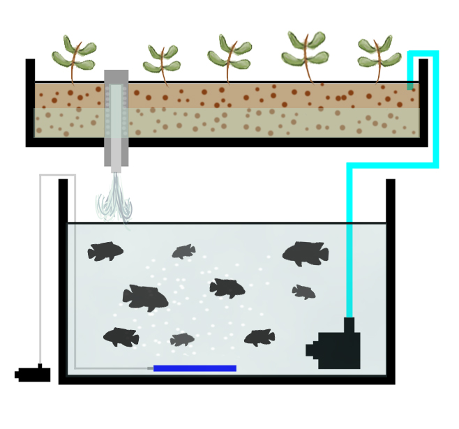 aquaponics-diagram2  Way Lighting Diagram on three lamps, detailed airport, for dramatic shoots, business portrait, control panel wiring, trx250r, pin up photography, studio strobe, food photography, photo shoot, for idiocracy, low key photography,